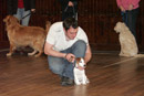 Dog Training at St John's Town of Dalry Town Hall