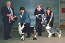 Eric & Helen were voted by the members of the Border Collie Club of GB to be the first husband and wife team to judge their championship show.