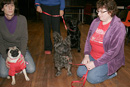 Dog Training at St Johns Town of Dalry Town Hall with Eric Broadhurst